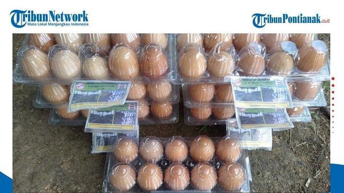 Ternak Ayam Petelur, Mendorong Desa Mandiri Pangan di Kalimantan Barat - telur-ayam-segar-yang-baru-dipanen.jpg