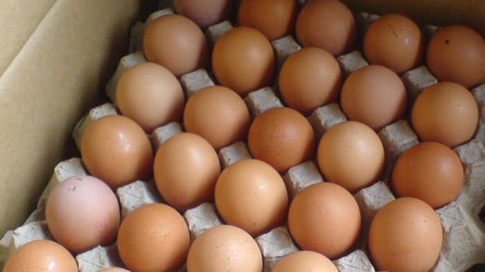 BANYAK TAK TAHU, Ternyata Telur Dimasak Seperti Ini Bisa Jadi Racun Hingga Picu Penyakit Serius