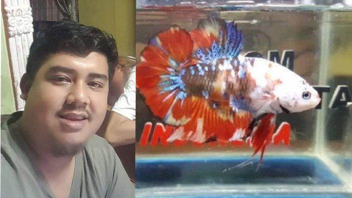 Jual Sepasang Ikan Cupang Rp 500 Ribu Ini Cerita Tio Fajar Ryantiarto Tribun Pontianak