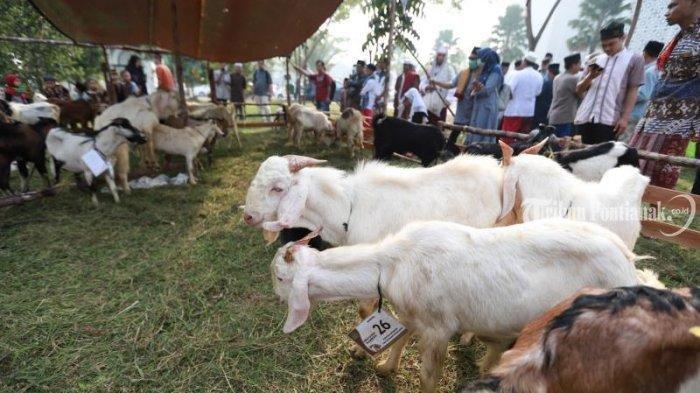Daftar Harga Hewan Kurban Idul Adha 2021 ! Cek Harga Sapi , Kambing dan Domba