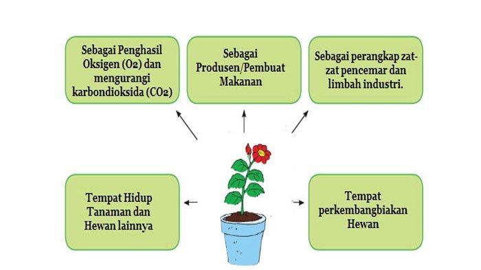 Tulislah manfaat tumbuhan bagi makhluk hidup dalam diagram berikut!