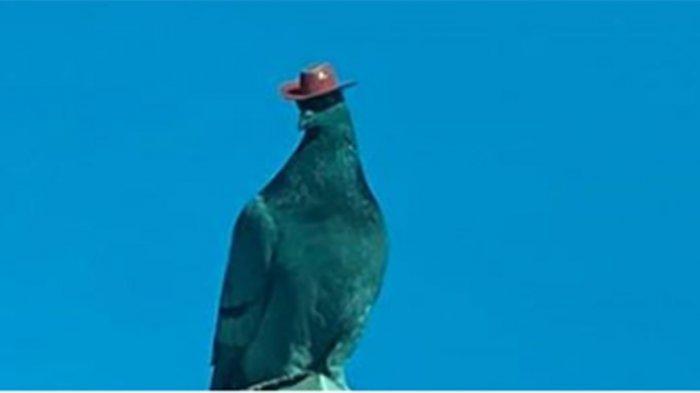 Viral Burung Merpati Misterius Bertopi Koboi Berkeliaran di Las Vegas, Mendadak Bikin Heboh