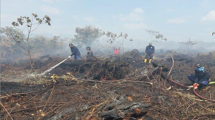 ZAT Berbahaya Dihasilkan Dari Kebakaran Hutan Mengandung? Berisiko Sebabkan Gangguan Kesehatan