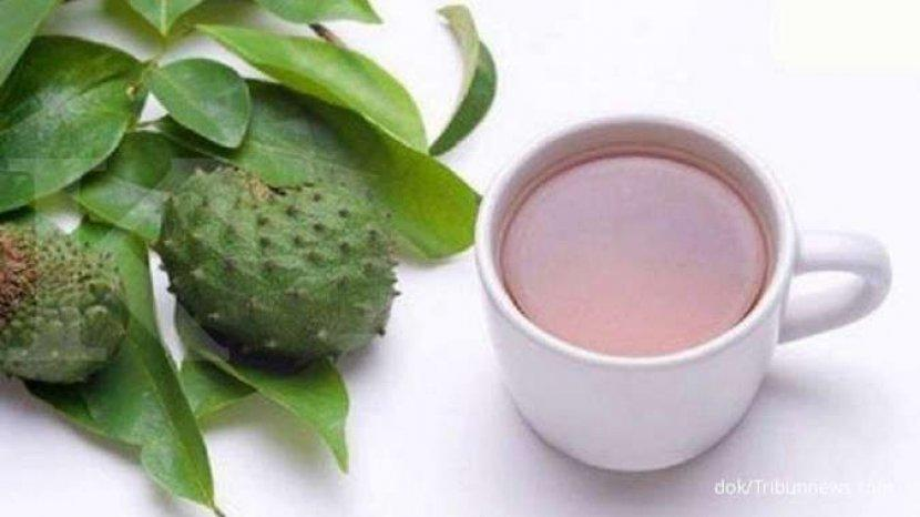 manfaat-daun-sirsak-untuk-kesehatan-dan-obat-herbal-cara-buat-teh-daun-sirsak-obat-diabetes.jpg