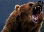 Beruang-Grizzly.jpg