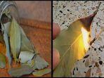 bakar-daun-salam-selama-10-menit-dalam-ruangan-ini-manfaat-luar-biasa-yang-tubuh-anda-rasakan.jpg