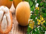 buah-kecapi-mirip-buah-manggis-khasiatnya-mampu-mengontrol-gula-darah-sembuhkan-banyak-penyakit.jpg