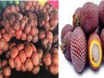 buah-kelubi-dan-aguaje-adalah-buah-yang-mirip-salak.jpg