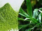 cara-membuat-obat-herbal-kolesterol-dari-daun-suji.jpg