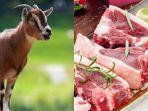 cara-mengolah-daging-kambing-cepat-empuk-dengan-bahan-alami-dijamin-rendah-kolestrol-dan-tidak-bau.jpg