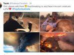 cerita-pilu-kebakaran-hutan-di-australia-sita-perhatian-hingga-prayforaustralia-trending-twitter.jpg