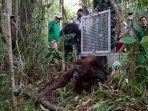 dua-orangutan-yang-dilepas-liarkan-iar-indonesia.jpg