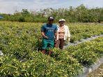 fredi-petani-milenial-desa-sayang-sedayu-kecamatan-teluk-keramat.jpg
