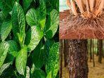 fungsi-daun-batang-bunga-akar-biji-fungsi-buah-pada-tumbuhan.jpg
