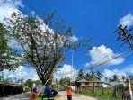 ganguan-listrik-karena-pohon-banyak-terjadi-pontianak.jpg