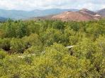 hutan-bakau-flores_20160118_174154.jpg