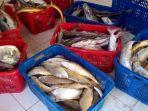 ikan-ikan-yang-dijual-nelayan-di-kepulauan-karimata.jpg