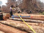 ilegal-logging-sawmill-teluk-bakung-8.jpg