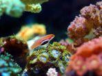 ilustrasi-ikan-hidup-di-terumbu-karang.jpg