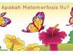 ilustrasi-metamorfosis-kupu-kupu.jpg