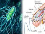 jenis-bakteri-coliform-yang-menyebabkan-penyakit-tifus-dan-diare-kenali-gejala-penyakit-tipes.jpg