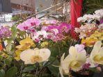 kembang-anggrek-yang-dipamerkan-pada-pekan-hortikultura-kota-pontianak.jpg