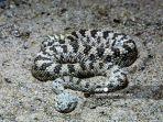 ketahui-penyebab-ular-masuk-rumah-dan-cara-terbaik-mengusirnya.jpg