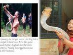 king-cobra-vs-pawang-ular-di-toho-kalbar-panji-petualang-ucap-duka-cita-dan-beri-peringatan-keras.jpg