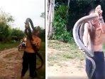 king-kobra-bunuh-pawang-ular-1.jpg