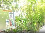 mempawah-mangrove-park_20160912_174604.jpg