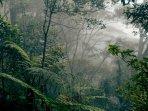mistis-tengah-malam-di-hutan-belantara-sambas.jpg