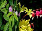 nama-bagian-tumbuhan-fungsinya-dari-fungsi-akar-tumbuhan-hingga-fungsi-bakal-buah.jpg