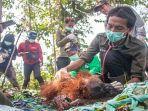 orang-utan-induk-dan-anak-iar-indonesia.jpg