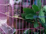 orangutan_20170822_143335.jpg