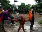 orangutan_20180302_133328.jpg