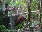 orangutan_20180719_135335.jpg