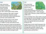padi-dan-teh-di-buku-tematik-terpadu-kurikulum-2013.jpg