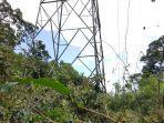 pangkas-pohon-di-jalur-transmisi-listrik.jpg