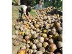 petani-kelapa1.jpg