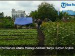 petani-pontianak-utara-merugi-akibat-harga-sayur-anjlok.jpg