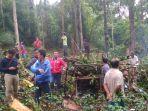 pohon-durian-tumbang.jpg