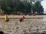 proses-penanaman-bibit-mangrove_20180422_125855.jpg