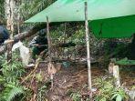 satgas-pamtas-ri-mly-yonif-407pk-kembali-menemukan-puluhan-kubik-kayu-hasil-illegal-logging.jpg