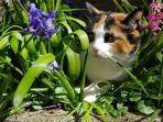 seekor-kucing-saat-bermain-di-tanaman-hias.jpg