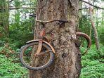 sepeda-lengket-di-pohon_20170316_212950.jpg