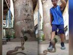 tak-takut-ancaman-maut-pria-ini-nekat-menari-breakdance-dengan-king-kobra-begini-reaksi-si-ular.jpg