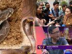 terpopuler-isu-sesat-virus-corona-di-singkawang-ular-berbisa-hingga-rocky-gerung-yasonna-laoly.jpg
