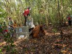 tim-gabungan-wildlife-rescue-unit-wru-balai-konservasi.jpg