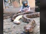viral-beredar-seorang-cewek-berparas-cantik-bermain-main-dengan-ular-piton.jpg