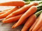 wortel-berkembang-biak-dengan-cara-dan-manfaat-dari-wortel-adalah.jpg